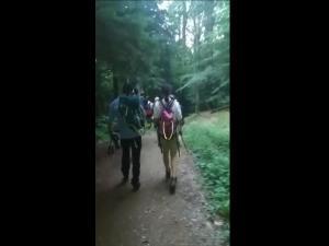 Mai multi turisti, salvati de jandarmii montani. Unii s-au intalnit cu o ursoaica cu doi pui - VIDEO