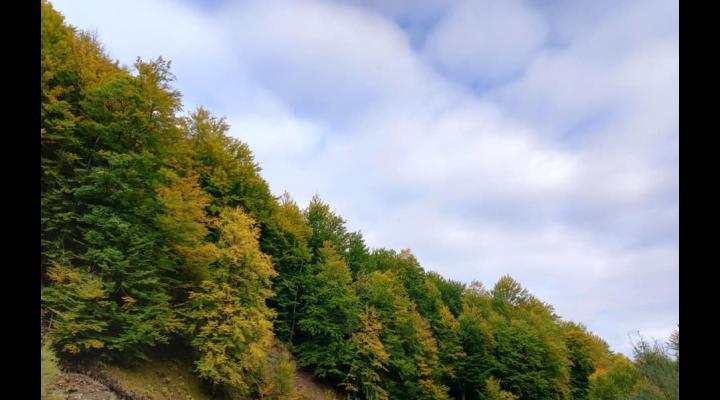 Peisaje desprinse parcă din basme, în pădurile administrate de Direcția Silvică Prahova