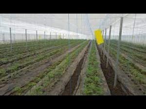 Agricultură ecologică și în Prahova/Ce culturi există