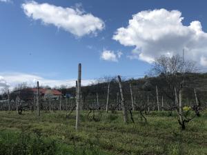Vești bune pentru producătorii din domeniul viniviticol: APIA pune în aplicare o nouă măsură pentru susținerea acestui sector